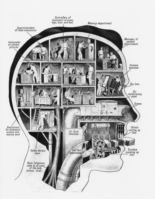 brainschematic