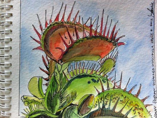 rsz_botanical_drawings